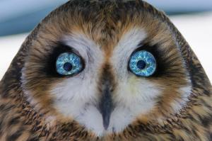 2015_12 owl eyes